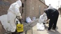 大陸H7N9確診63例