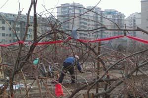 北京天通苑被疑土壤污染